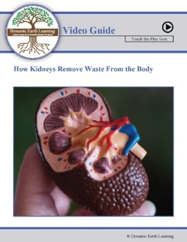How the Kidneys Remove Waste from the Body - Biology and Physiology Worksheet