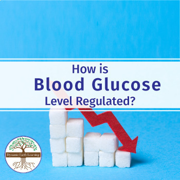 How is Blood Glucose Level Regulated? Biology Video Worksheet
