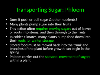 Biology! Plants: Transport, Reproduction, and Response