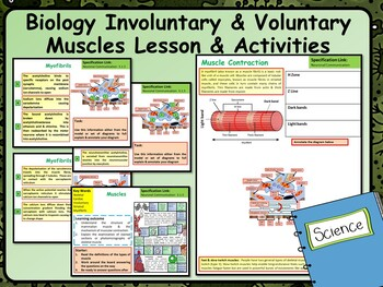 Biology Involuntary & Voluntary Muscles Lesson