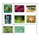 Biology Kingdom Classification Card Sort