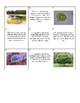 Biology Kingdom Classification Card Sort