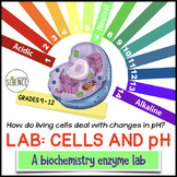 Cells, pH and Buffers: A Biochemistry Enzyme Lab Activity