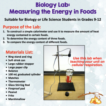 Biology Lab: Measuring The Energy In Foods