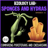 Biology Lab: Sponges and Hydras - Porifera and Cnidaria