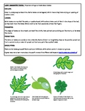 Biology Lab - making observations of leaves