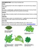 Biology Labs - life science observations of flowers, insects, cells, and flowers