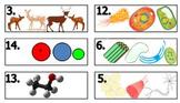 Biology Levels of Organization Task Card Matching (Fully Editable, No Prep, Key)