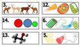 Biology Levels of Organization Task Card Matching (Fully E