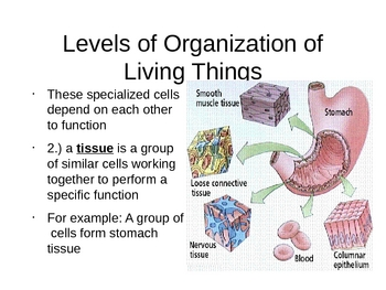 Biology Levels of Organization of Living Things