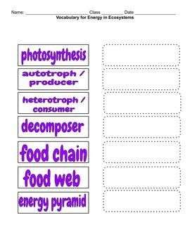 Biology / Life Science Vocabulary - Energy in Ecosystems