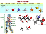 Chemical Basis of Life - Macromolecules Unit w worksheet