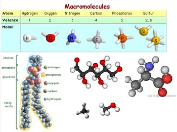 Chemical Basis of Life - Macromolecules Unit w worksheet