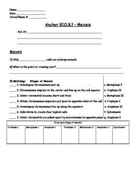 Genetics - Meiosis Worksheet