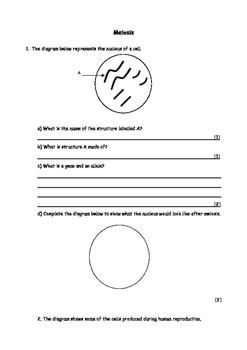 Biology: Meiosis worksheet