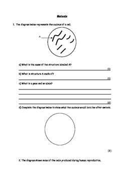 Biology: Meiosis worksheet