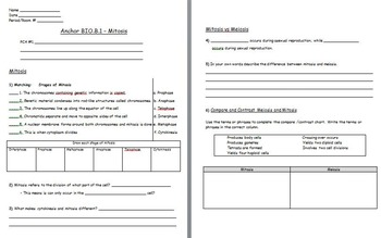 Cell Reproduction - Mitosis worksheet included