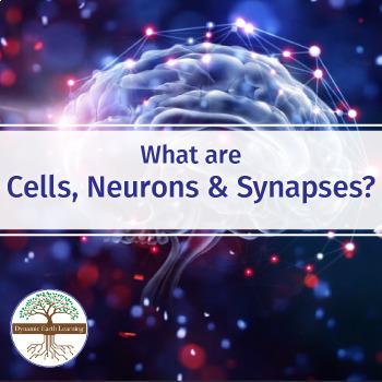 Biology-NERVE CELLS: FuseSchool Biology Video Guide