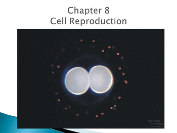 Biology Notes Cell Reproduction with Turning Point Questions