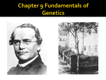 Biology Notes Fundamentals of Genetics