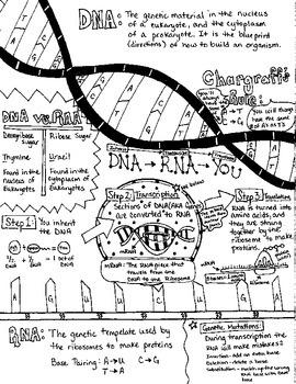 Biology Notesheets