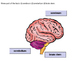 Biology - Organ Systems - The Central Nervous System Detailed