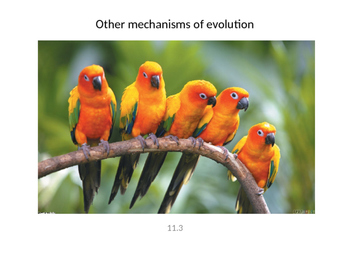 Biology - Other Mechanisms of Evolution