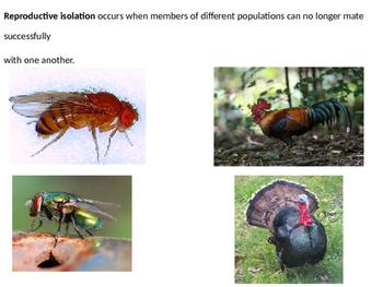 Biology - Other Mechanisms of Evolution