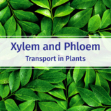 Xylem and Phloem - Transport in Plants - Introduction Biology Video Worksheet