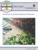 Biology-PLANTS CLASSIFICATION: FuseSchool Video Guide