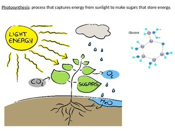 Biology - Photosynthesis