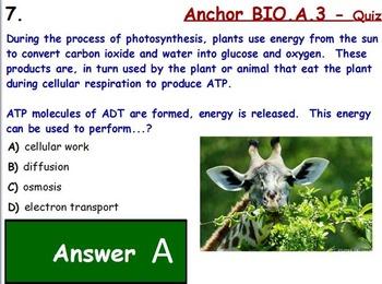 Bioenergitics - Photosynthesis Assessment (Quiz); ATP