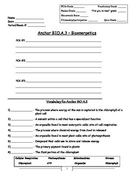 Bioenergitics - Photosynthesis and Cell Respiration Worksheet