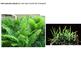 Biology - Plant Biology