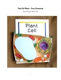 Biology Plant Cell Model 3 Dimensional Project Organelles Nucleus