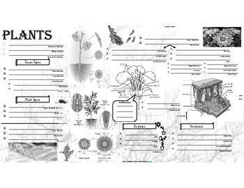 Biology - Plants Notes / Review Page