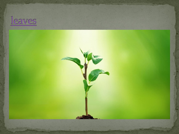 Biology Powerpoint - Plants, chapter 22