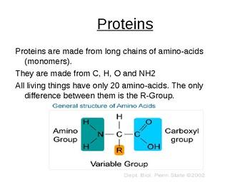 Biology - Proteins.