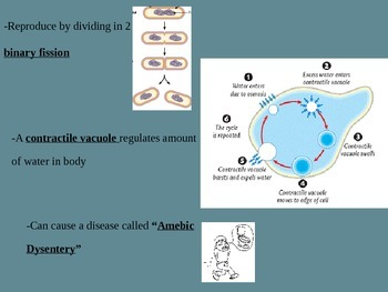 Biology: Protists (Visually Adapted for ELL/ESL)