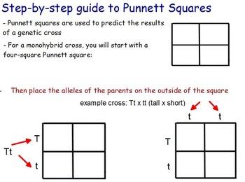 Genetics - Punnet Squares w/ worksheet