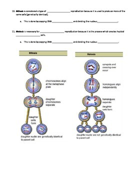 Biology EOC Review Bundle - TWO Review Options for Each Major Biology Domain