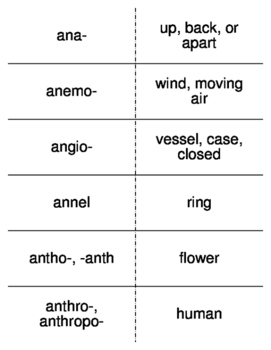 Biology Root Words Flash Cards