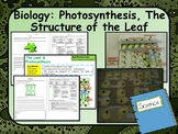 Biology (Science) Leaf Structure & Photosynthesis Lesson