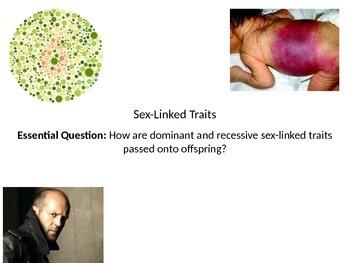 Biology - Sex-linked traits