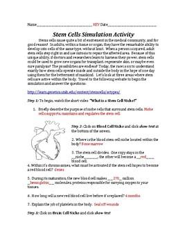 Stem Cells INTERACTIVE Online Virtual Simulation Activity Lab!