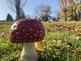 Biology Study of Mushroom: PHOTOGRAPHS