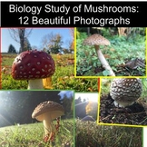 Biology Study of Mushroom: PHOTOGRAPHS