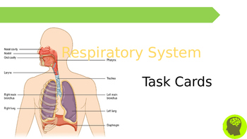 Biology Task Cards: Circulatory System