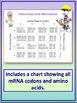 RNA, Transcription and Translation Test for Grades 8-12