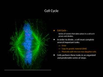 Biology! The Cell: Differentiation, Division, Mitosis, and Regulation